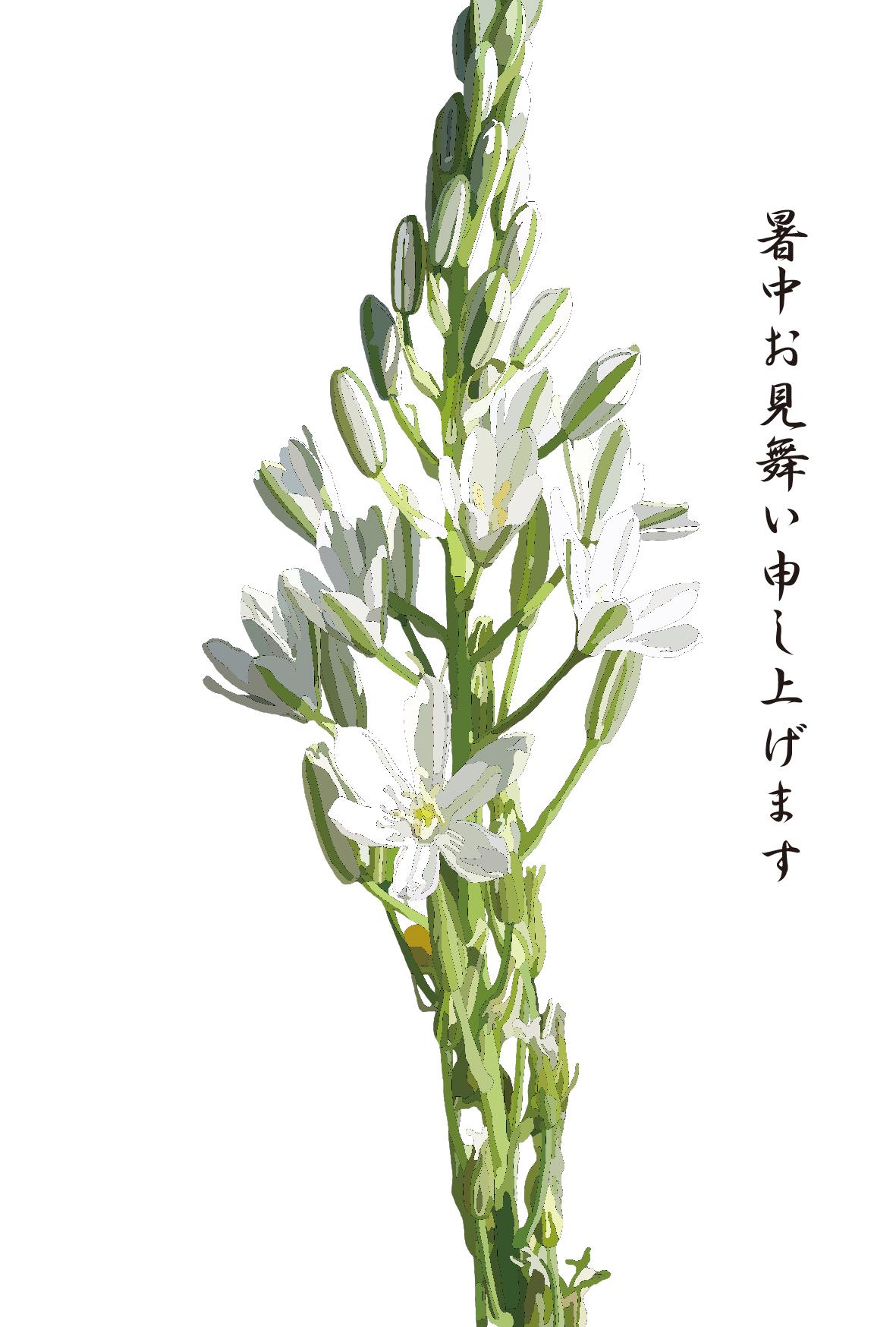 白いお花のシンプルな暑中見舞いイラスト オオアマナー