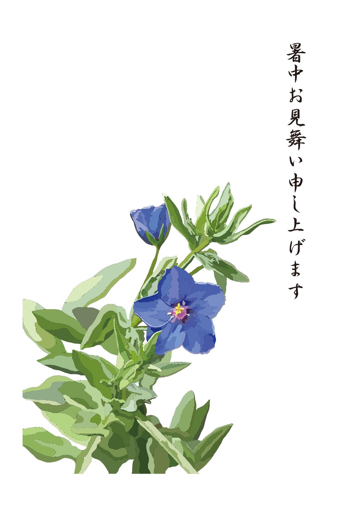 紫のお花のシンプルな暑中見舞いイラスト ルリハコベ